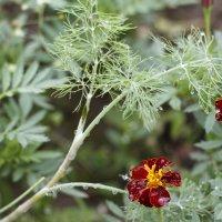 Цветы дачи :: esadesign Егерев