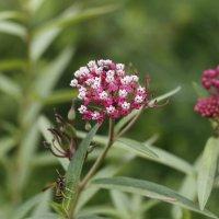 дачные растения :: esadesign Егерев