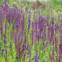 Летние цветы :: Ольга Давыдова