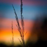 закатно :: Анастасия Биковская