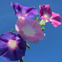 Цветы :: Mariya laimite
