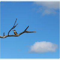 Kingfisher :: Natalya секрет