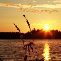 Summer goodbye :: Мила Соловьева
