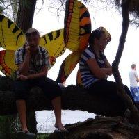 Ялтинские бабочки, ну кто же виноват... :: Stas Ra