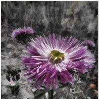 Цветок #3 :: Евгений Кочуров
