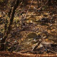 Осенний лес :: Лиза Холостова