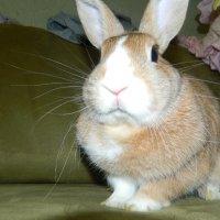 Кролик Тоша) :: Лиза Холостова