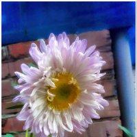Цветок #4 :: Евгений Кочуров