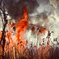 Пожар :: Евгений Гресь
