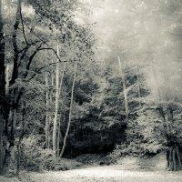 Сказочный лес :: Александр Хохлов