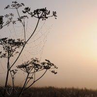 Уренний туман :: Диана Задворкина