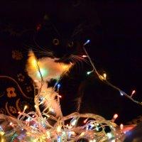 Не за горами Новый год. :: Олеся Бе бе