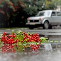 гроздь рябины.. :: Надежда Шемякина