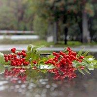 после дождя.. :: Надежда Шемякина