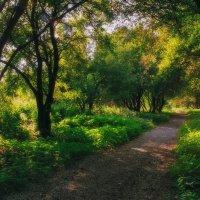 К реке :: Алексей Попов