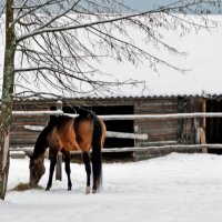 Зима :: Алла Шулепина