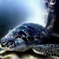 Черепаха :: Виктория Гавриленко