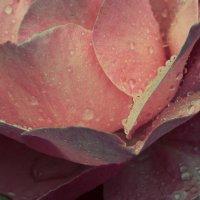 розовый свет :: Александра Крук