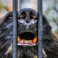 Свободу медведям! :: Nn semonov_nn
