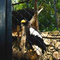 Орёл :: Света Кондрашова