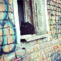 Кошка в старом доме. :: Света Кондрашова