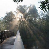 Утро в Шведском лесу :: Dasha Fotopeak