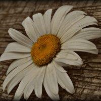 Цветочек :: Kristinochka S