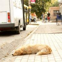 ждёт хозяина с работы :: Вероника Подрезова