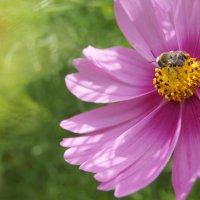 Пчелка :: Элен Bliss Чичкова Елена