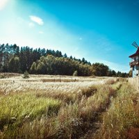 Мельница у леса :: Андрей Поспелов