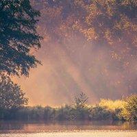 Розовое утро :: Waldemar F.