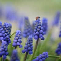 Запахло весной.. :: Александр Довгий