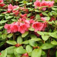 Апрельское цветение :: Natalia Harries