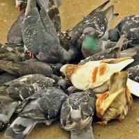 вкусности для птичек :: Варвара