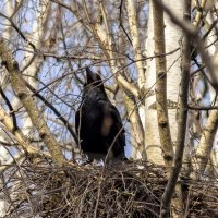 укрепление гнезда :: оксана