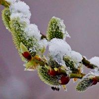 И вечная зима... Нам лето только снится... :: Wirkki Millson