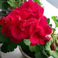 Аленькие цветочки... :: Анна .