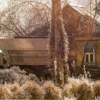 Солнечный снежок :: sorovey Sol