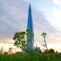 Башня и пижма :: Елена