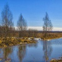 И ручьи превратились в реки :: Сергей Цветков