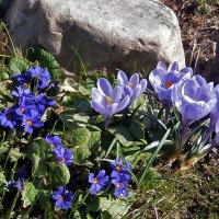Весенние цветы :: olgadon