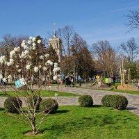 В городе весна :: Андрей K.