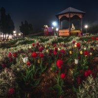 Парк Анны Ахматовой в Севастополе, покрытый туманом... :: Алексей Латыш