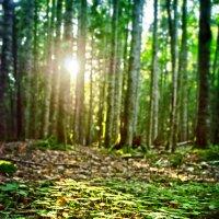 Солнечные дни :: Денис Масленников