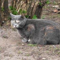 Сердитый кот :: Маргарита Батырева