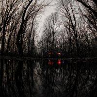 заколдованный лес ... :: Роман Шершнев