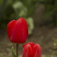 Солдаты Весны :: Валерий Басыров