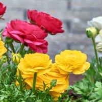 Цветы :: Sergej