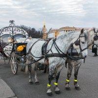 Дворцовые лошадки :: Александр Кислицын