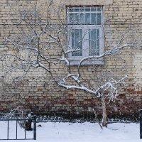 Стена, окно, снег :: Майя Жинка